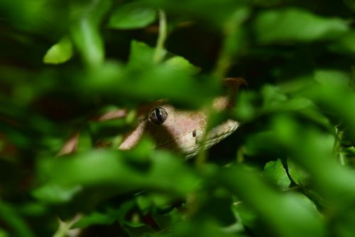 snake lurking reptile