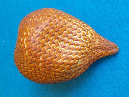 snakefruit salacca edulis snake skin fruit