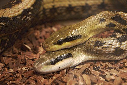 snakes reptiles vivarium