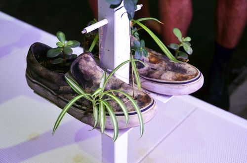 sneakers shoes plant