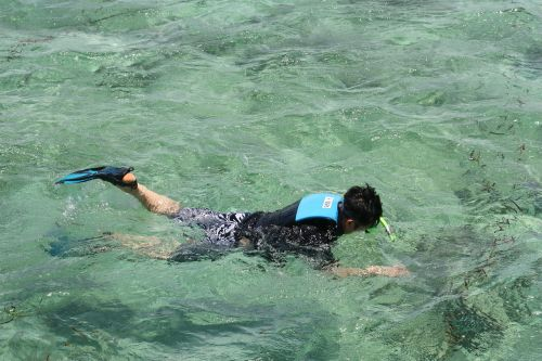 snorkeling details sea