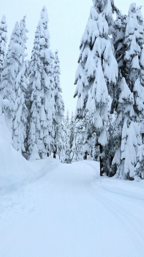 winter snow forest