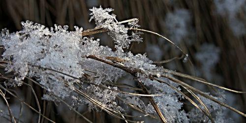 snow flakes ice