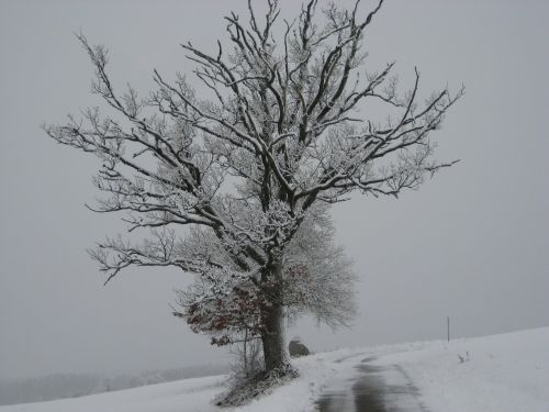 snow wintry tree