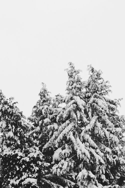 snow snowfall cold