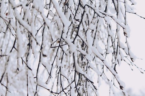 snow branches winter
