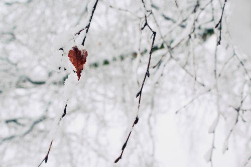 sniegas,filialai,žiema,gamta,medis,šaltas,filialas,balta,snieguotas,padengtos šakos,žiemą,estetinis,sniego magija,žiemos svajonė,žiemos magija,žiemos nuotaika,prisnigo į,žiemos miškas,lapai,rudens lapas,vienišas,vienas