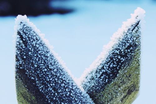 snow frost fence