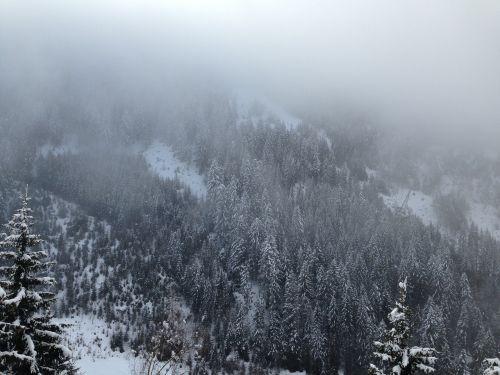 snow trees pine trees