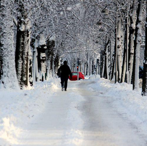snow street tree