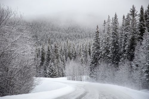 snow evergreen trees winding road