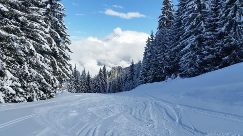 snow scene trees