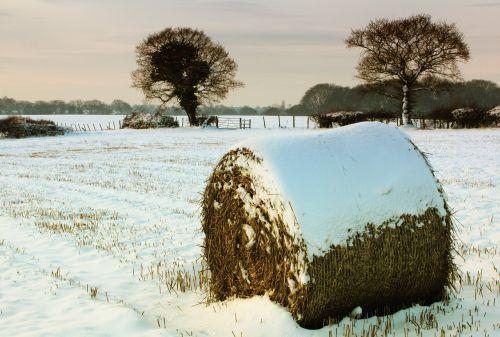 snow hay bale