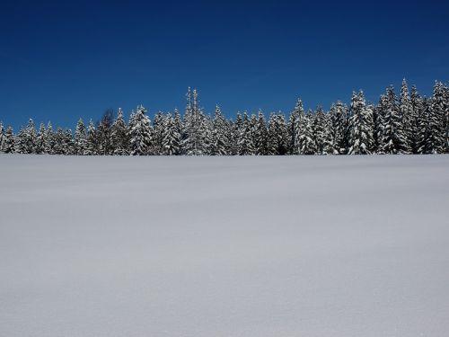 snow fir landscape