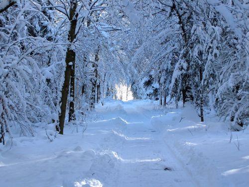 snow forest path walk