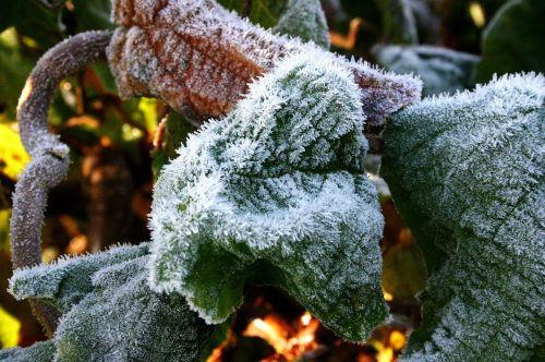 snow eiskristalle leaves