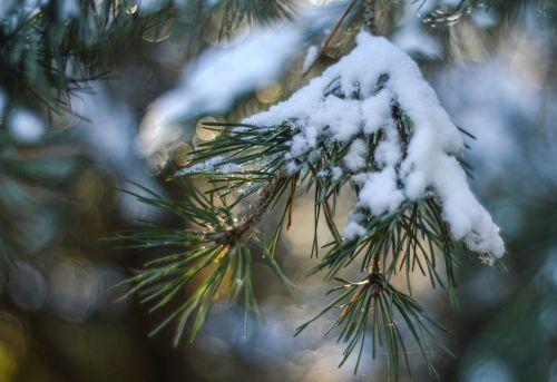 snow winter holidays