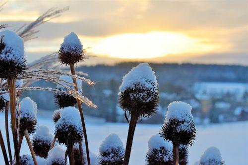 snow landscape winter