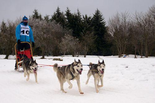 snow races sled