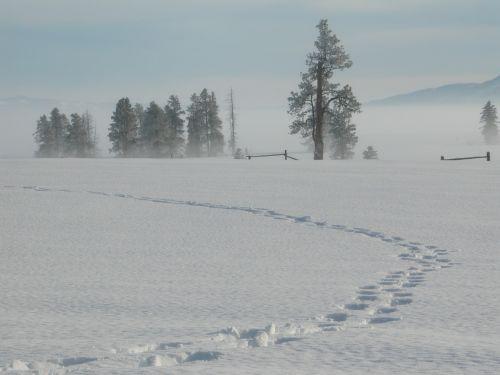 snow winter tracks