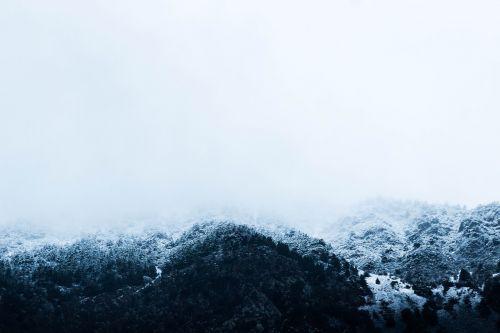 snow winter trees