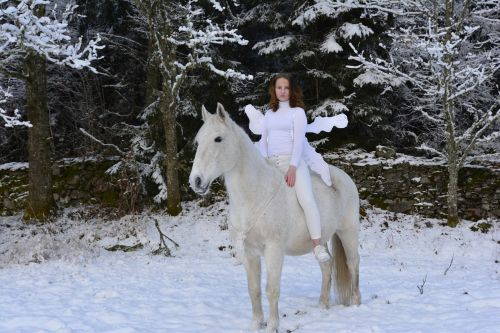 snow beautiful horse