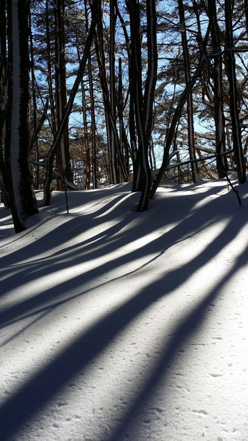 snow shadow wood