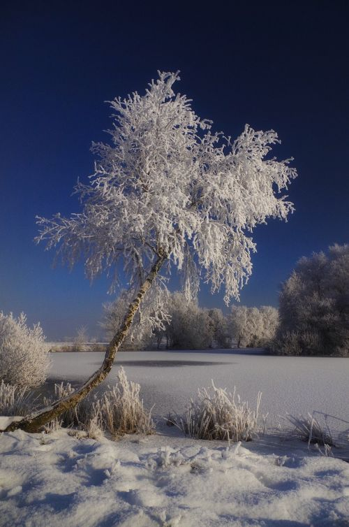 snow winter tree