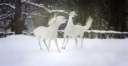 snow winter nature