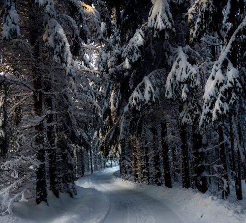 snow winter woodwork