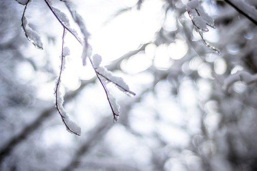 snow  light  winter