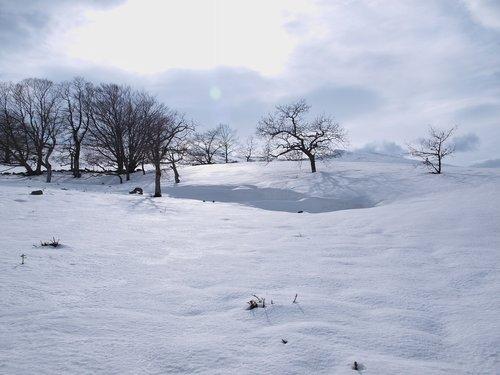 snow  christmas  park