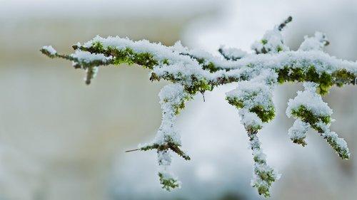 snow  snowfall  snowy