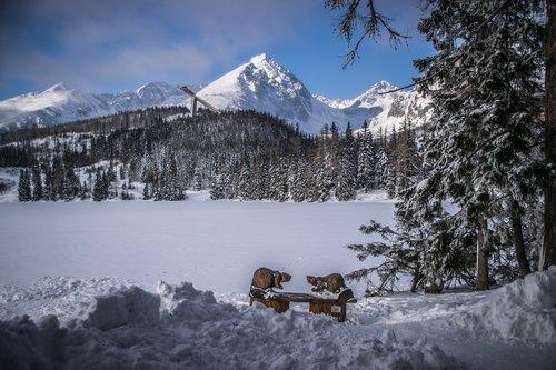 snow  drifts  winter