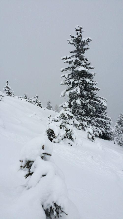 snow winter alpine