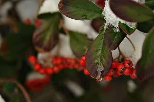 snow ice trees