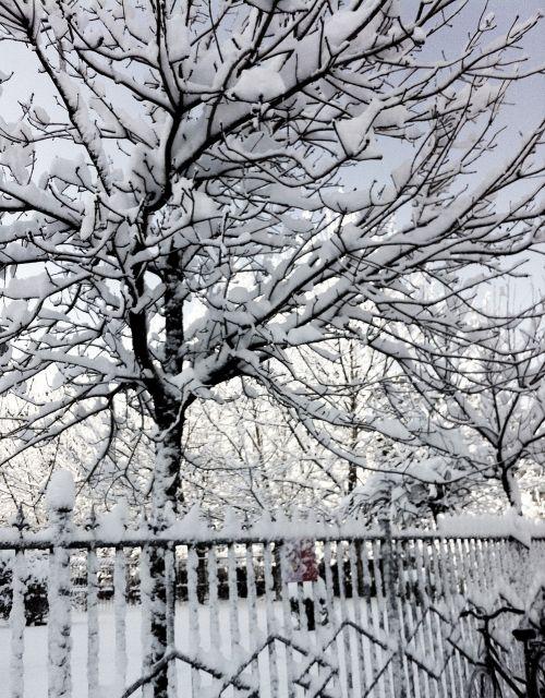 snow winter beijing