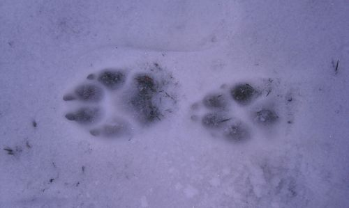 snow footsteps mountain