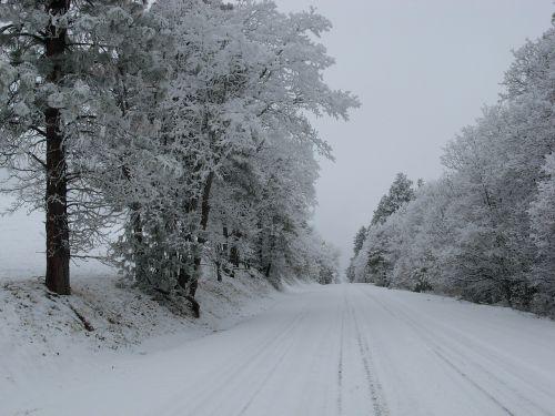 snow road trees