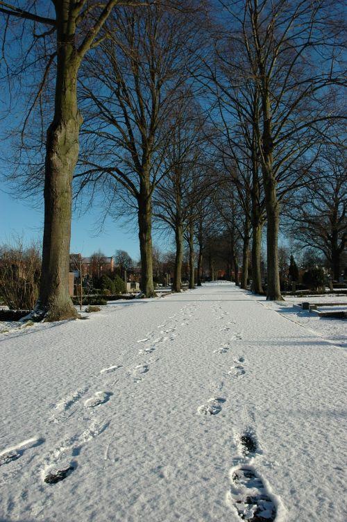 snow footstep winter