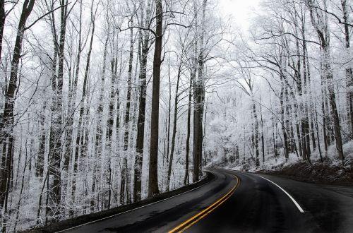 snow trees ice