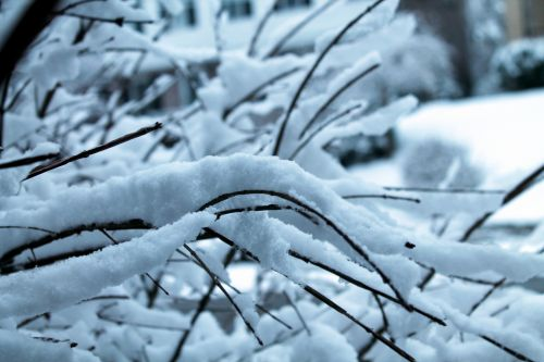Snow Covered Branches - 01