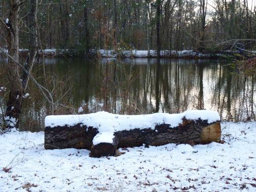 sniegas, žiema, žurnalas, tvenkinys, lauke, diena, sniego dengtas žurnalas