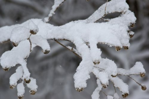 Snow Covers A Tree Branch