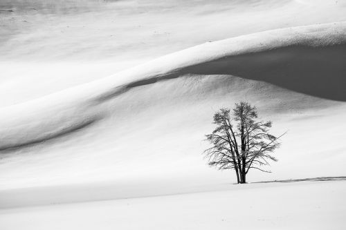 snow dunes winter tree