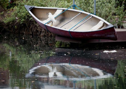 Snow Egret On Rowboat
