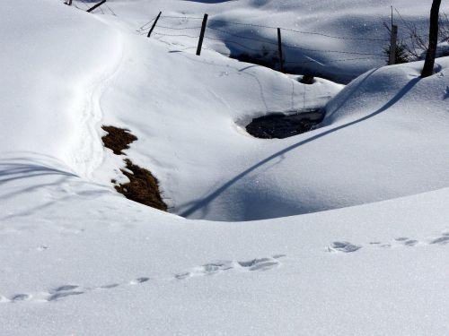 snow grips shadow snowed in