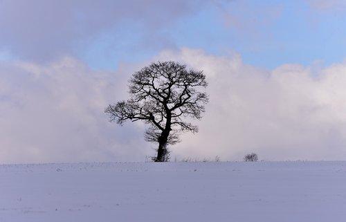 snow landscape  winter  tree
