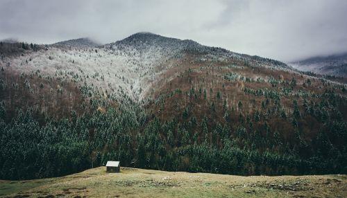 snow mountain forest trees snow