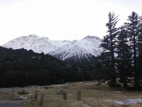 snow mountain tree mount cook